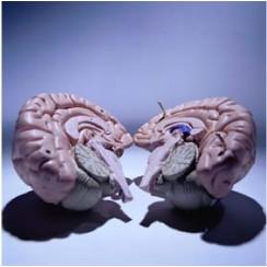 brainhemis